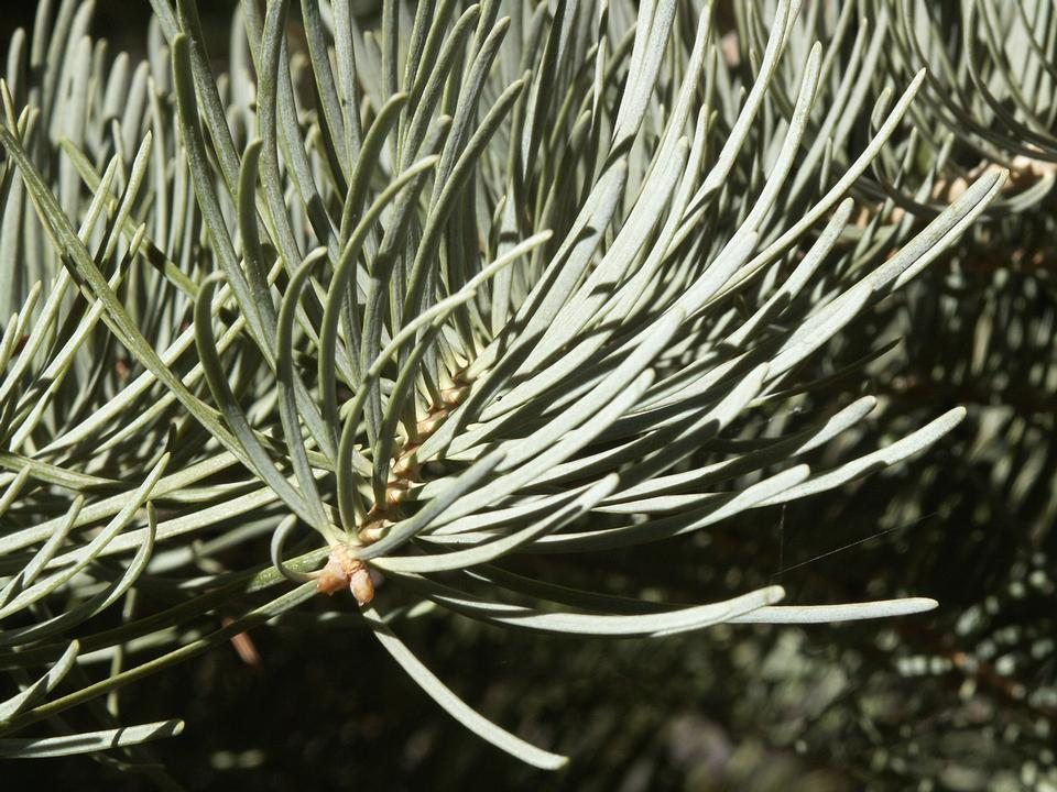 Foliage Closeup