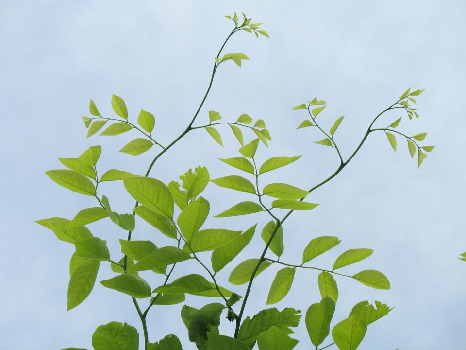 Leaves, Twigs