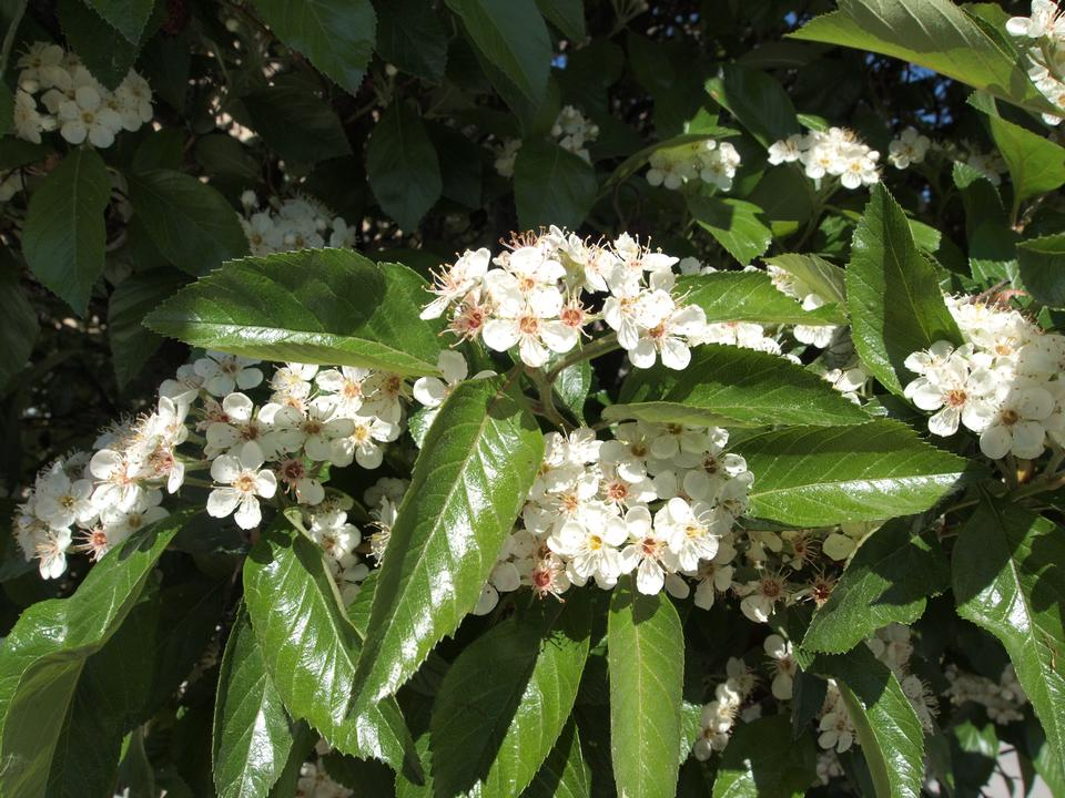 Flowers, Leaves