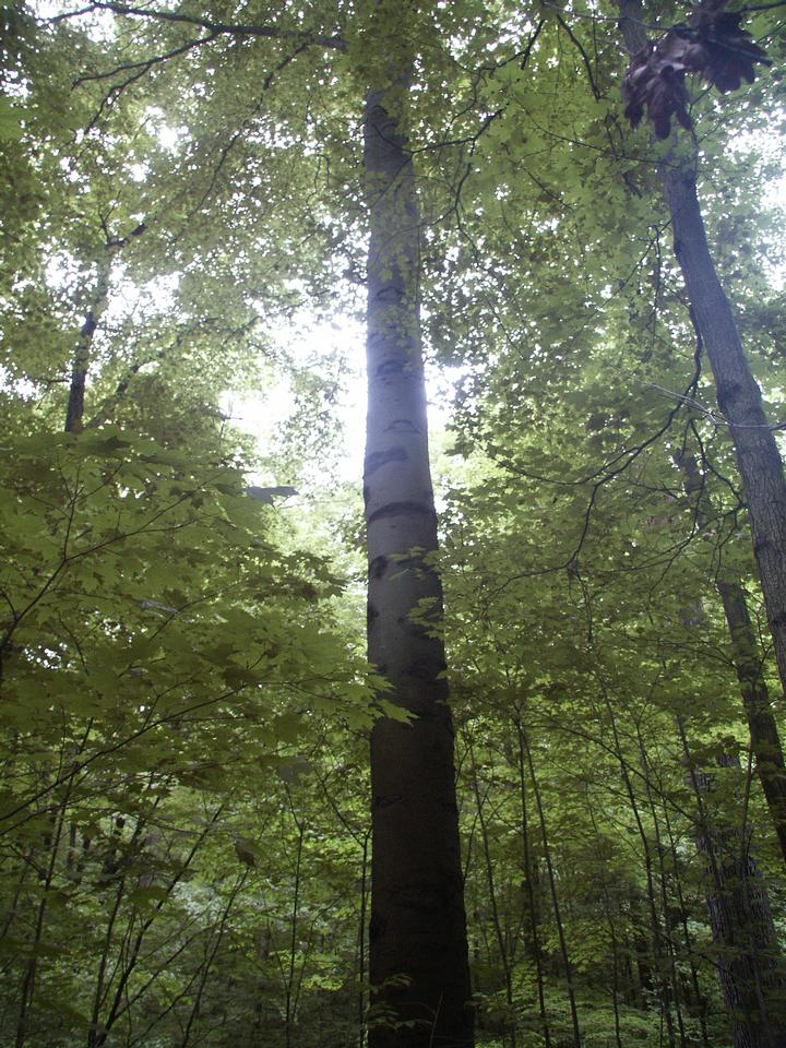 Beech Forest, Ohio