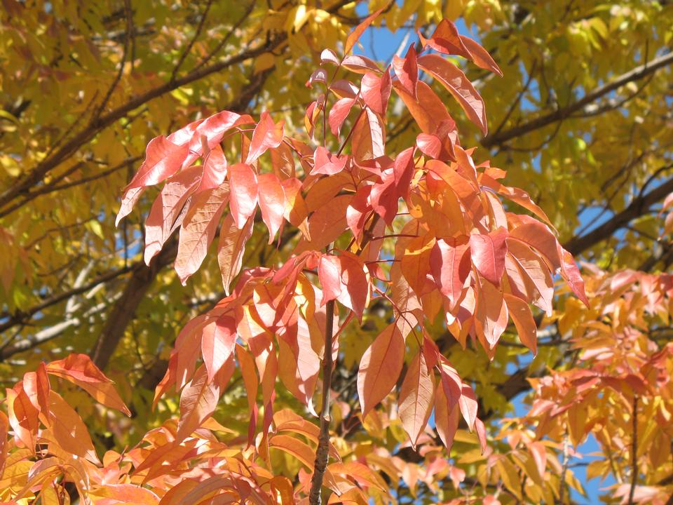 Leaves in Fall