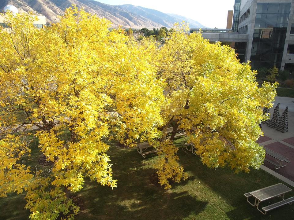 Crown, Fall Color, USU Campus