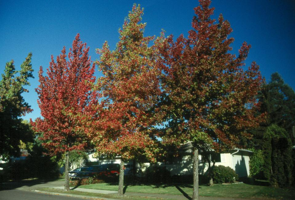 Fall Color Variation