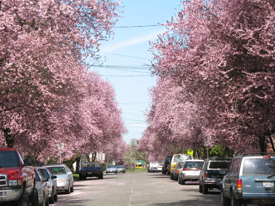 Crowns in Bloom, Seattle