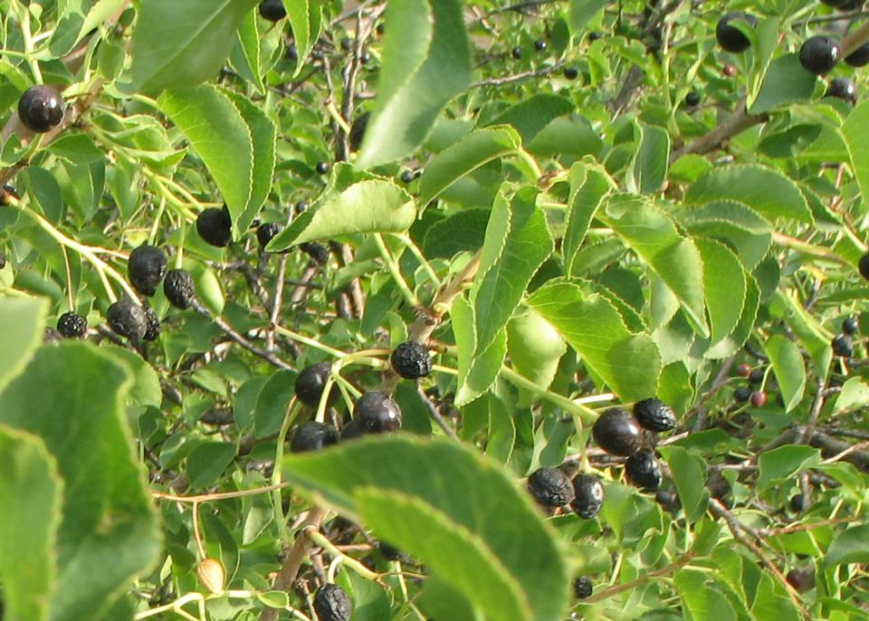 Foliage and Fruit