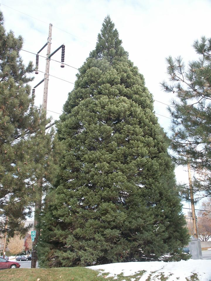 Planted Tree, Salt Lake City