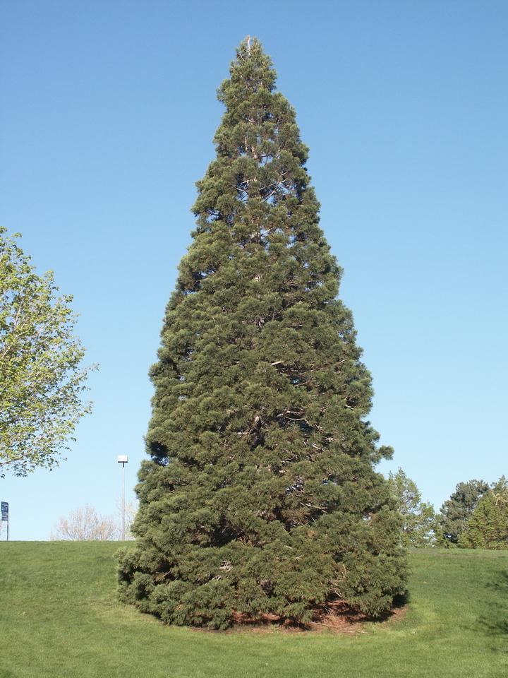 Planted Tree, Weber State University